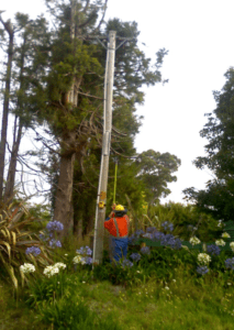 X-Poles wood pole manteinance device